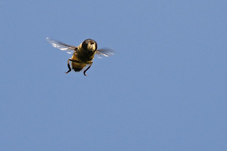 2016 07 23_Hover Fly-1.jpg