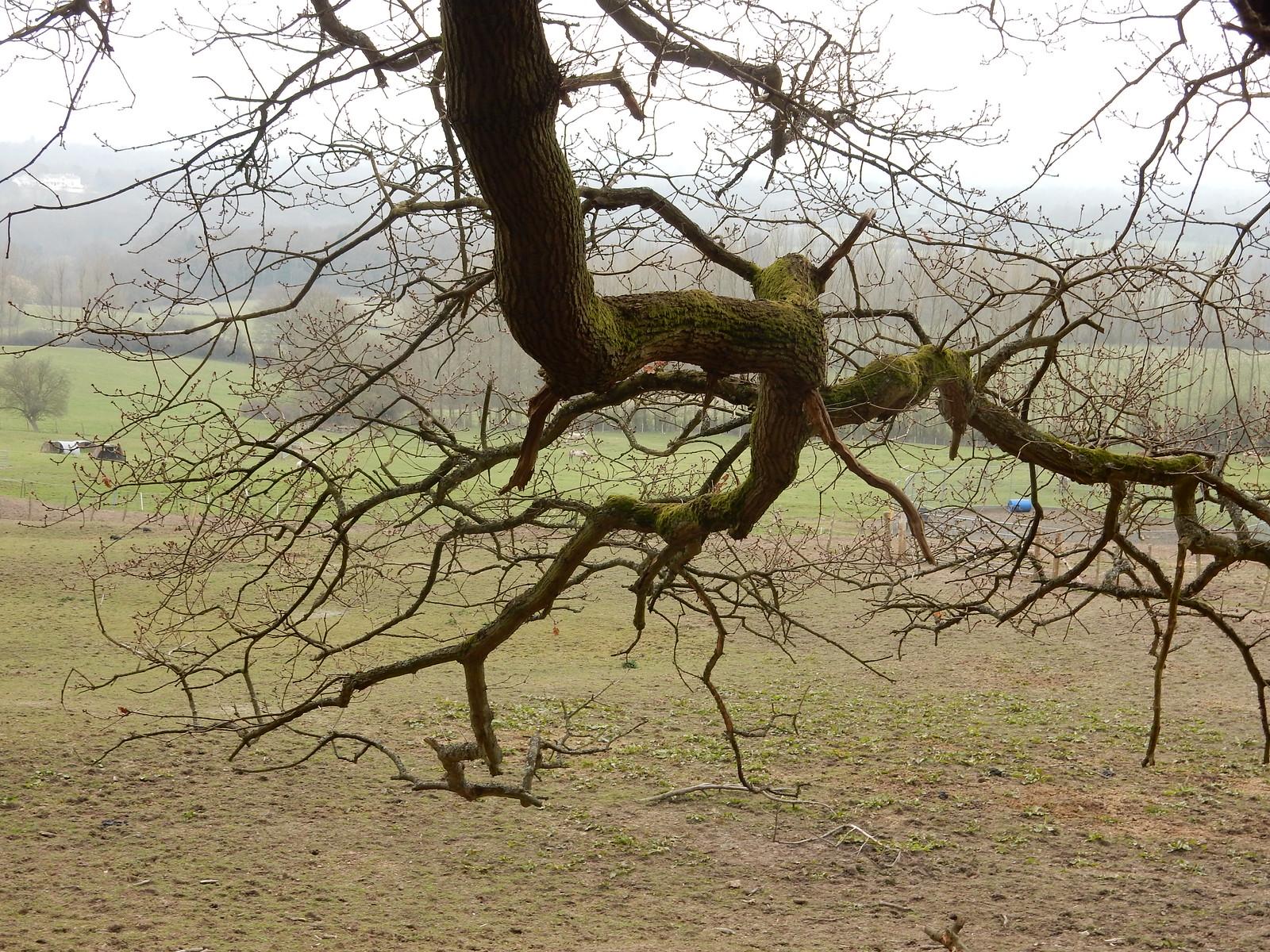Branch Sevenoaks Circular