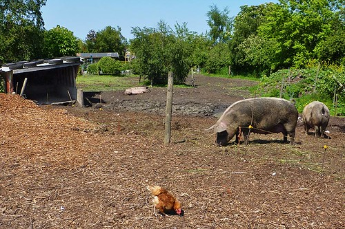 The Pig Sty is a favourite stop on the Lochside Trail, Saanich Peninsula, Victoria, Vancouver Island, British Columbia
