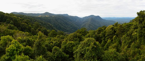 panorama landscapes rainforest newengland australia newsouthwales dorrigo waterfallway nikond750