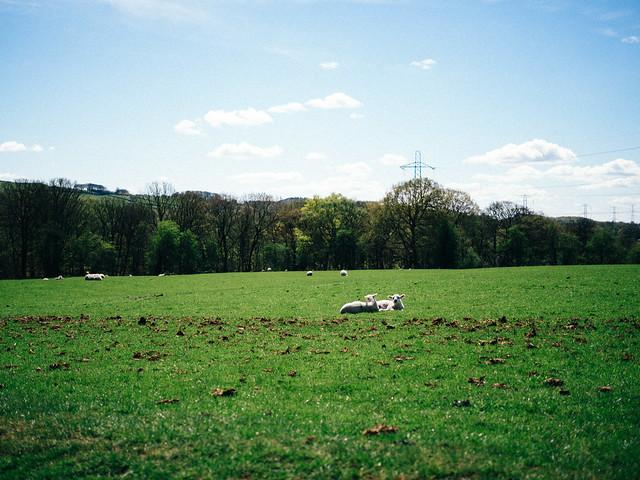 Lambs [explored]