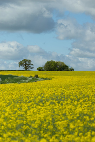 tree field yellow clouds landscape countryside suffolk 2152015 215in2015 image72215