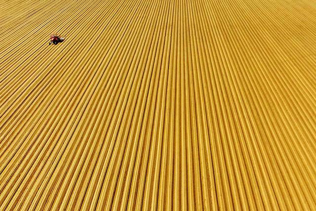 Obradjeno Panonsko more (polja šargarepe)