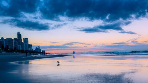 peope morning sand winter seashore australia seagull walk water beach sea surfersparadise queensland オーストラリア au