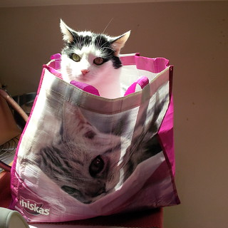 Cat in a bag...revisited
