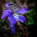 Print: Butterflies