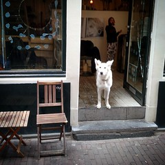 white dog #amsterdam