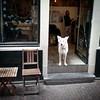 white dog #amsterdam