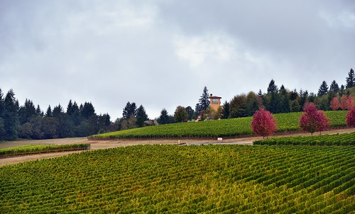 americanviticulturalarea building capturenx2edited cloudyskies colorefexpro day2 domaineserene domaineserenewinery hillsides lookingnorth nature nikond800e project365 rowsofvineyards stairtower trees triptomountrainierandcolumbiarivergorge vineyards willamettevalley willamettevalleyava or unitedstates