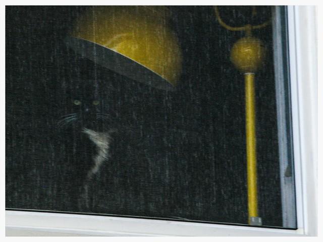 Black Cat Yellow Lamp