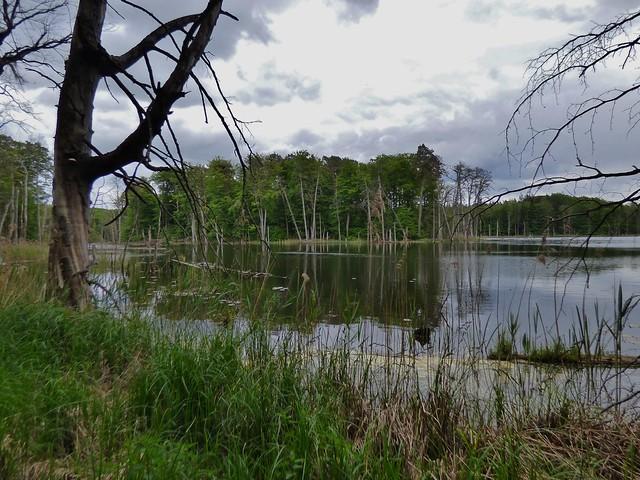Müritz National Park in Mecklenburg-Vorpommern, Germany - May 2015