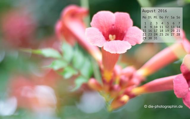 blumen_august_kalender_die-photographin