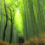 Sagano Bamboo Forest