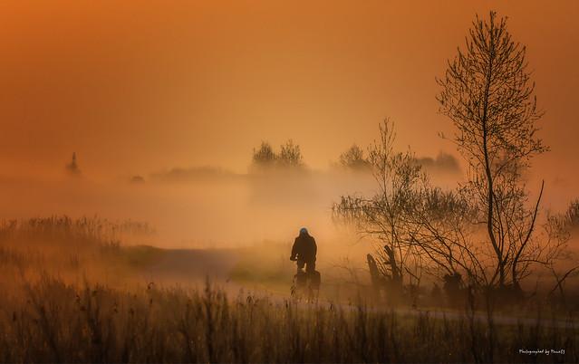Landschaft - Nebel