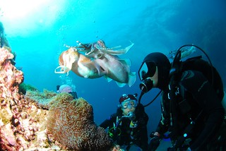 Scuba Diving cuttlefish | by www.travelosio.com