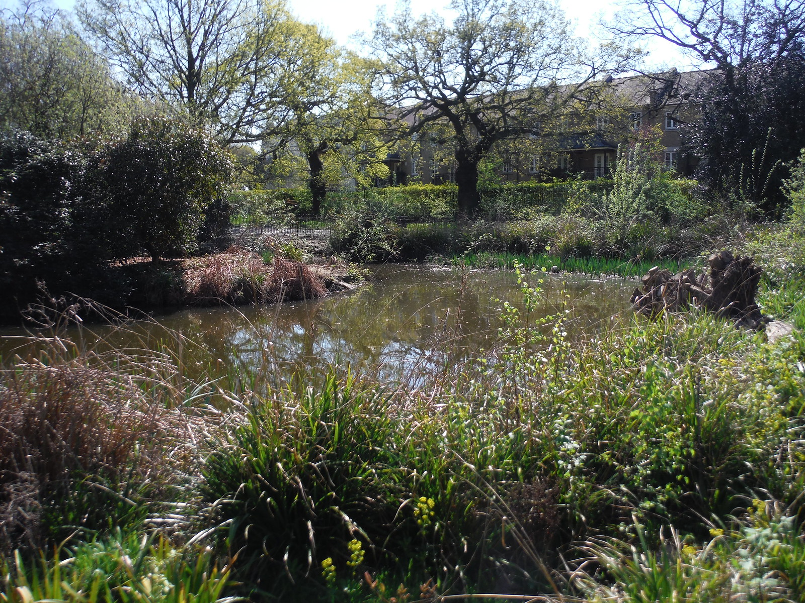 Pond 1 fed by Effra Tributary, Brockwell Park SWC Short Walk 39 - Brockwell Park (Herne Hill Circular or to Brixton)