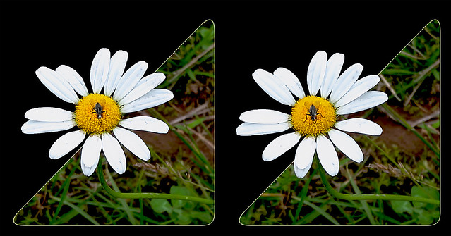 Fly on Flower 2 - Parallel 3D