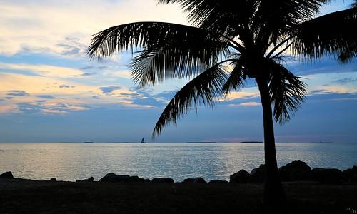 photosbymch landscape seascape sunset palms palmtree shoreline silhouette sailboat goldenhour gulfofmexico fortzacharytaylorstatepark keywest florida usa canon 5dmkiii 2015