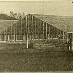 "Image from page 809 of ""The American florist : a weekly journal for the trade"" (1885)"