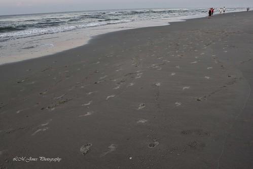 morning travel beach sc water sunrise landscape dawn early sand view bright tide southcarolina footprints rise tidal wyndham northmyrtlebeach 20150606myrtlebeachdawn