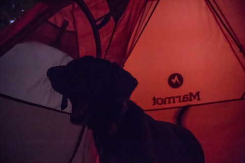 camping dog minnesota us unitedstates tent campground taylorsfalls interstatestatepark cortana