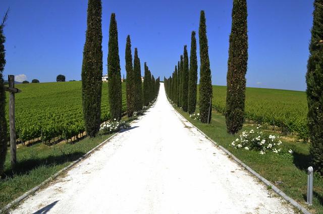 Terre del Sagrantino + 3