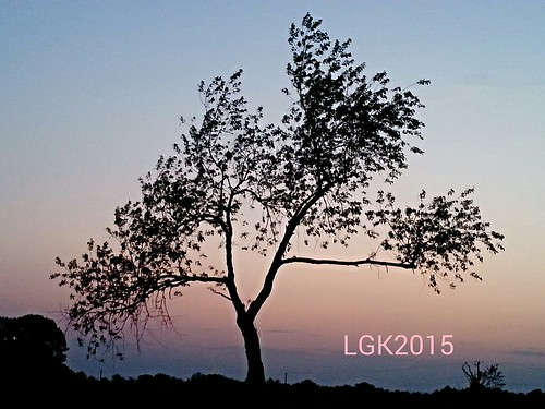 sunset summer tree silhouette pennsylvania lehighvalley northamptoncounty slatebelt plainfieldtownship