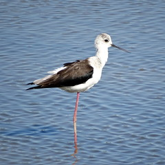 Ornitologia / Birdwatching