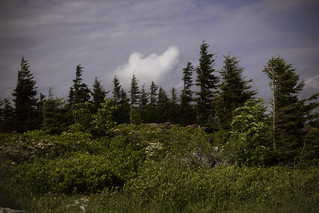 Dolly Sods | by lifeinthedistrict