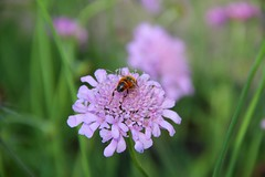 Flowers 059