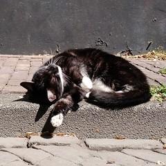 enjoying the sun in Amsterdam