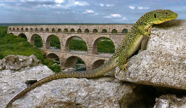 lezard du Pont du Gard