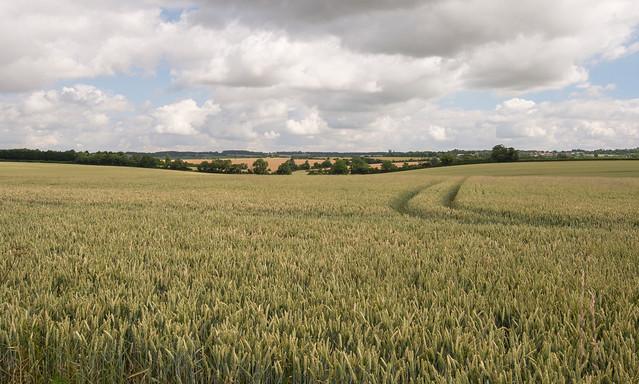 Horseheath, Nr. Haverhill Suffolk, UK