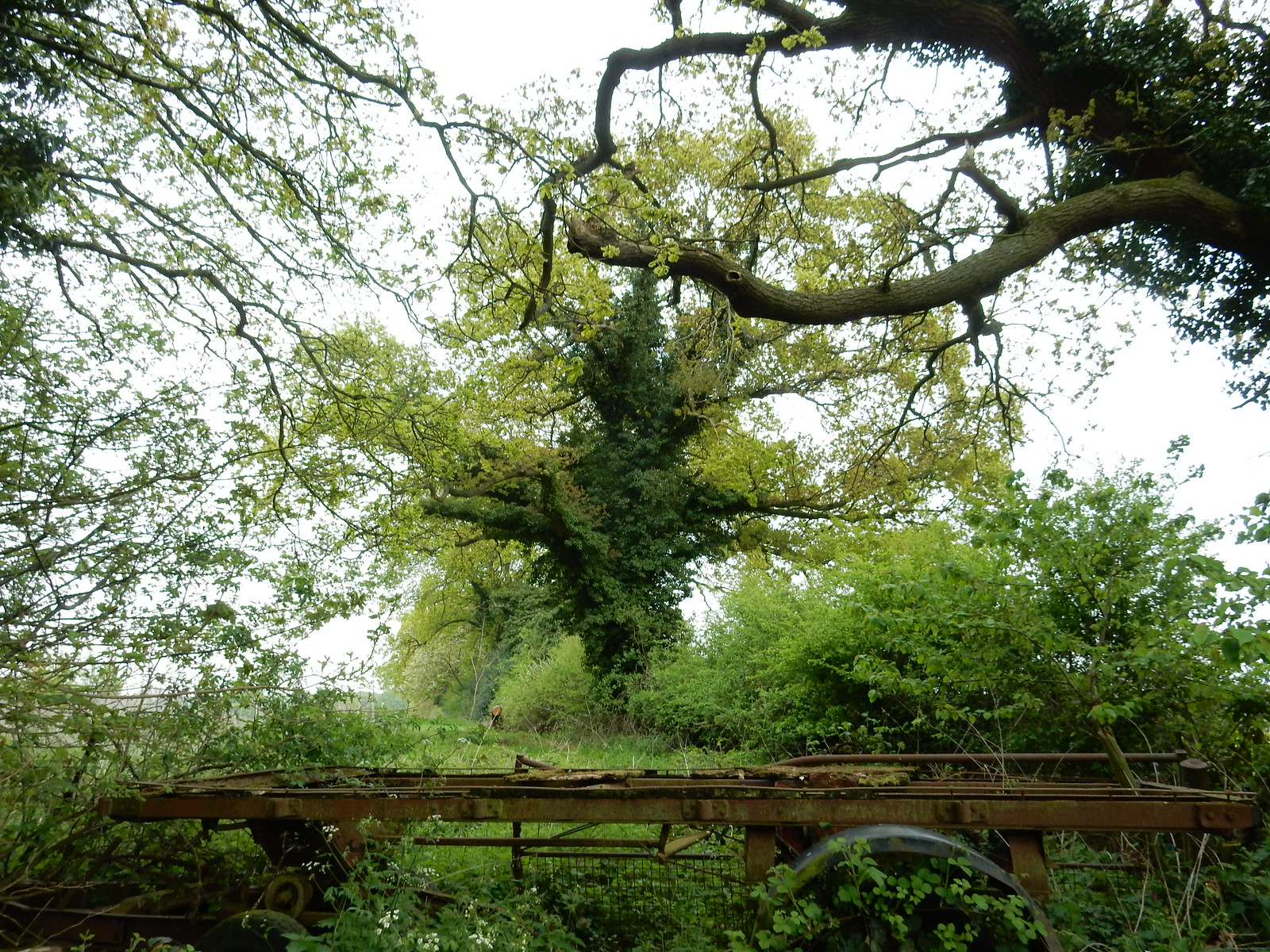 Ivied tree Going Circular via Hill Bottom