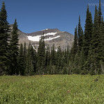 Meadows with Piegan Mountain