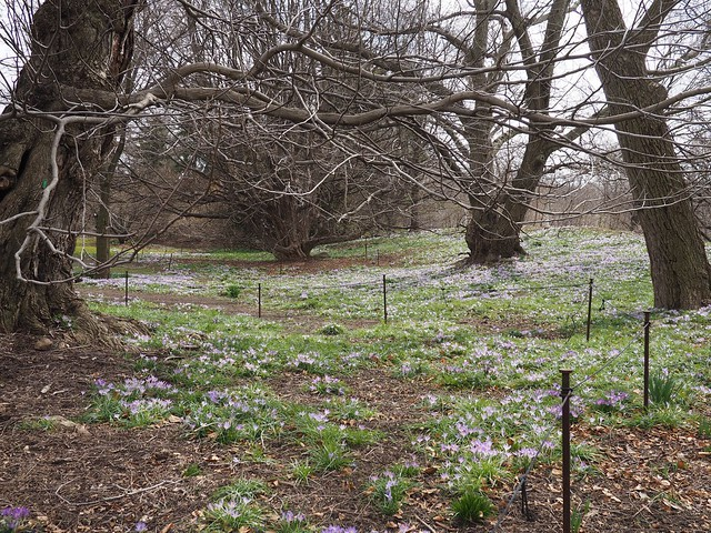 日, 2018-04-01 12:19 - Brooklyn Botanic Garden