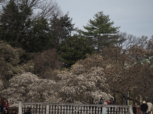 日, 2018-04-01 12:03 - Brooklyn Botanic Garden