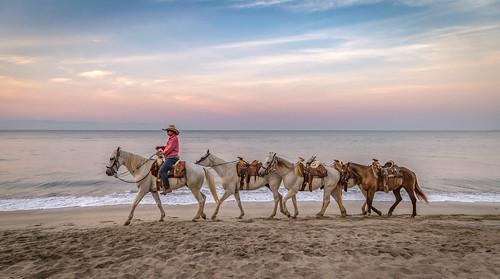 horses mexico2017 sunrise bucerías nayarit mexico mx img4013e canon6d