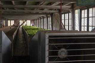 Labookellie Tea Factory | by seghal1