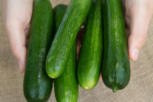 cucumbers-socrates
