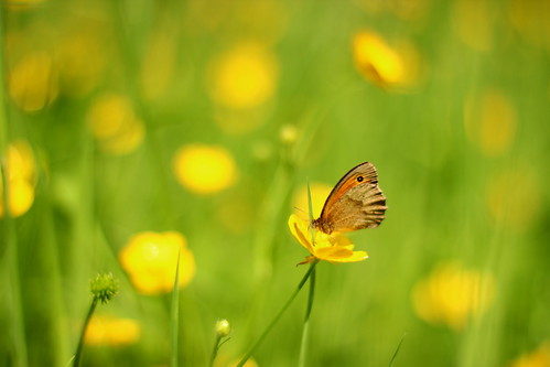 Myrtil | by missbutterflies
