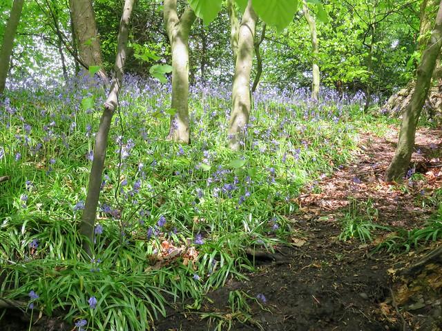 Congleton park woods