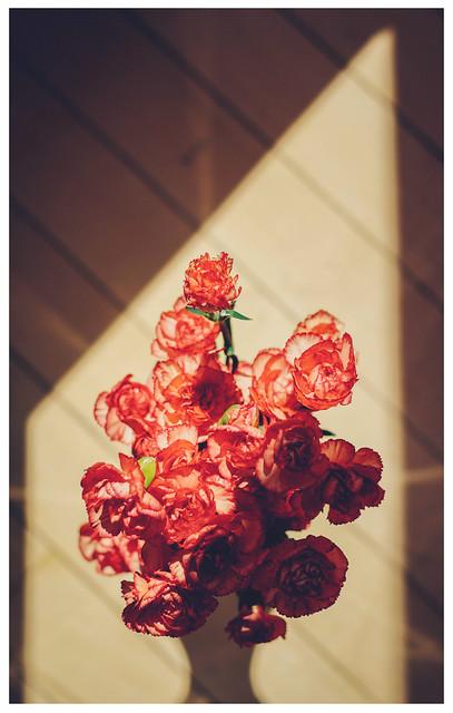 Light Shapes / Carnations