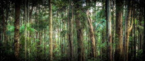 australia canon forest landscape leaves leefilters light longexposure nationalpark palms queensland rainforest shadow sunshinecoast trees