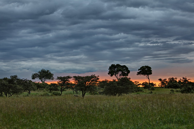 Drama on the Mara