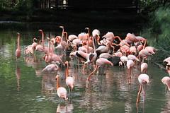 Zoológico de Cali 2016