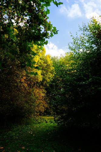 2014 landscape light nature tree village