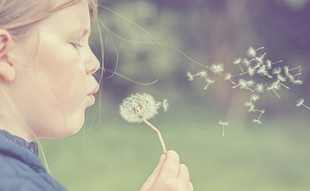 Sophie And The Dandelion.