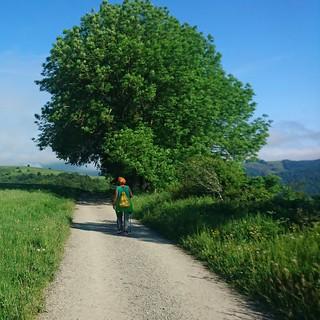Walking along the Camino de Santiago, Spain | by anywhereism