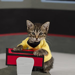 Sulu Kitty Cosplay 2 Crosswind Studio